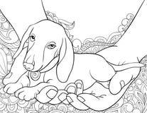 Den vuxna färgläggningboken, söker en gullig liten hund i händerna på den abstrakta bakgrunden för att koppla av Illustration för Fotografering för Bildbyråer