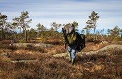 Den vuxna mannen, den bärande skurkrollen för den starka manliga fotografen vandrar och att gå in i den norska skogen för hans nä Royaltyfri Bild