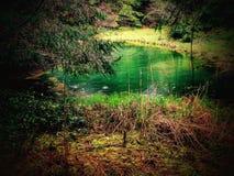 in den Wäldern von Oregon lizenzfreie stockbilder