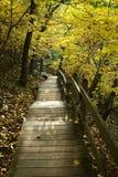 In den Wald Stockbilder