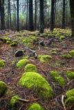 In den Wald Lizenzfreie Stockfotografie