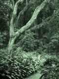 In den Wald Lizenzfreie Stockbilder