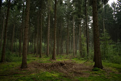 In den Wald Stockfoto
