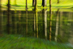 In den Wald tief gehen stockfotografie