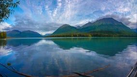 Den Wiled alaskabon nitar fortfarande med reflexionen av berget Royaltyfri Fotografi