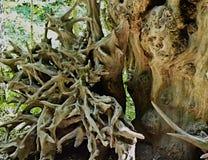 Den wood anden döljer bland de dråsade-ner träden Arkivfoton