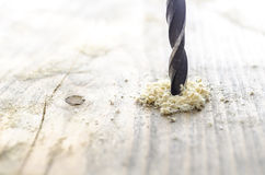 Den Wood drillborren bet med sawdust arkivfoton