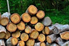 Den Wood högen, snitt och ordnar till för att delas för vedträ royaltyfria foton