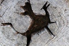 Den wood kärnan formas som en drake Royaltyfri Fotografi