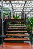 Den wood trappan. Royaltyfria Bilder