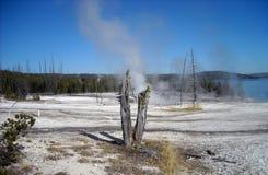 Den Yellowstone nutionalen parkerar Fotografering för Bildbyråer