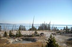 Den Yellowstone nutionalen parkerar Royaltyfri Foto