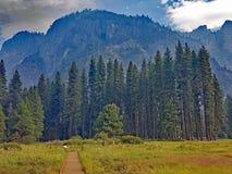 Den Yosemite dalen - fotvandra till och med de gröna ängarna Fotografering för Bildbyråer