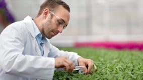 Den yrkesmässiga jordbruks- teknikern som häller kemisk gödningsmedel på gröna växter, spricker ut medelnärbilden stock video