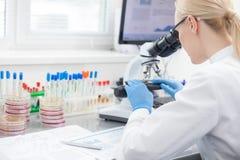 Den yrkesmässiga kvinnliga forskaren undersöker medicinska prövkopior Arkivfoto