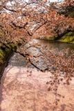 Den yttre vallgraven som fylls med den petalsmay körsbärsröda blomningen, kallas `-Hanaikada `, eller körsbärsröd matta på Hirosa Royaltyfria Foton