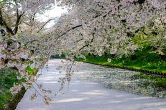 Den yttre vallgraven som fylls med den petalsmay körsbärsröda blomningen, kallas `-Hanaikada `, eller körsbärsröd matta på Hirosa Royaltyfri Bild