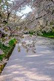 Den yttre vallgraven som fylls med den petalsmay körsbärsröda blomningen, kallas `-Hanaikada `, eller körsbärsröd matta på Hirosa Arkivbild