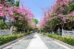 Den Yuantong templet är den mest berömda buddistiska templet i det Kunming, Yunnan landskapet, Kina Royaltyfria Foton
