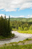 Denali国家公园风景 图库摄影