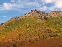 Denali国家公园 库存图片
