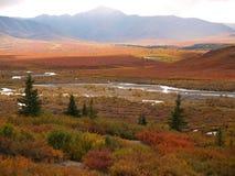 Denali国家公园 免版税库存图片