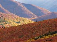 Denali国家公园 库存照片