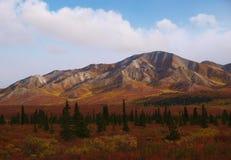 Denali国家公园 免版税库存照片