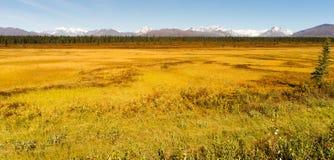 Denali范围中央阿拉斯加自然保护区 免版税图库摄影