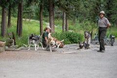 DENALI, ΑΛΆΣΚΑ: Εθνική επίδειξη σκυλιών ελκήθρων giva rangers υπηρεσιών πάρκων στο πάρκο στοκ εικόνες
