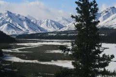 denali της Αλάσκας Στοκ Φωτογραφίες