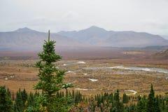 Denali Alaska Lizenzfreies Stockfoto