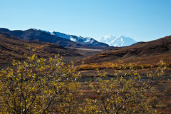 Denali in Autumn Royalty Free Stock Photo