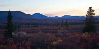 Denali in Autumn Stock Photography