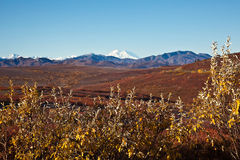 Denali in Autumn Stock Images