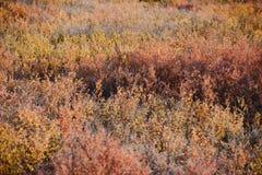 Denali fall colors Stock Image