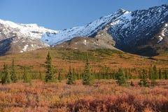 Denali fall colors Royalty Free Stock Images