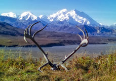 Denali Mountain Range with caribou antlers Royalty Free Stock Photos