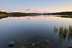 Denali Mountain and Reflection Pond Royalty Free Stock Photo