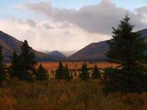 Denali Nationaal Park Stock Afbeelding
