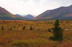 Denali Nationaal Park Royalty-vrije Stock Foto