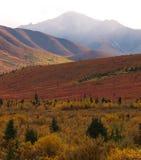 Denali Nationaal Park Stock Foto