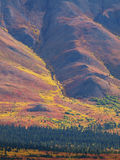 Denali Nationaal Park Stock Foto's