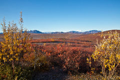 Denali National Park in Autumn Stock Photo
