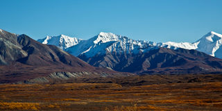 Denali National Park in Autumn Stock Photography