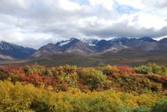 Denali National Park Fall. Denali National Park in the fall colors in Alaska Stock Images
