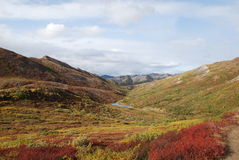 Denali National Park Fall. Denali National Park in the fall colors in Alaska Stock Photography