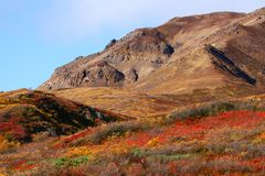 Denali National Park in fall colors Stock Image