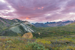Denali National Park Landscape Royalty Free Stock Image