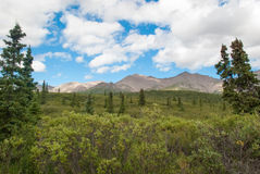 Denali National Park Landscape Royalty Free Stock Photos